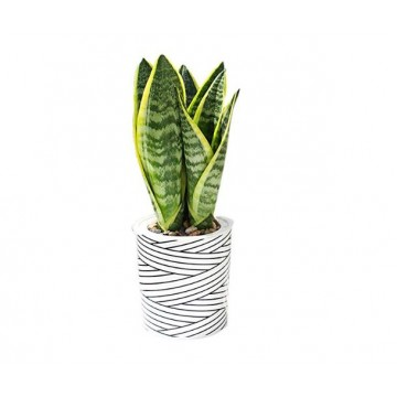 Stripe Self Watering Planter,Plastic Flower Pots for Indoor Outdoor Plant-No Plant is Included